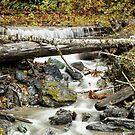 Autumn Mountain Stream by Jim Stiles