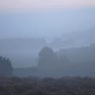 Dawns Early Mist by relayer51