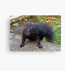 Black Squirrel Canvas Print