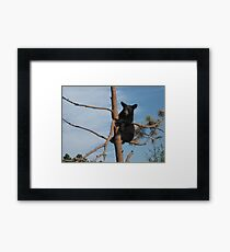 Black Bear Cub Just Hanging Out in a Tree Framed Print