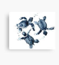 Indigo Blue Sea Turtles Canvas Print