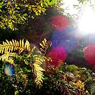 Sun Flare in an English Woodland by David Tovey