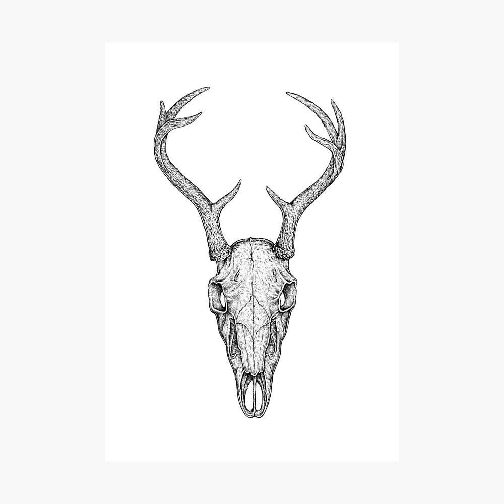 Deer Skull Photographic Print