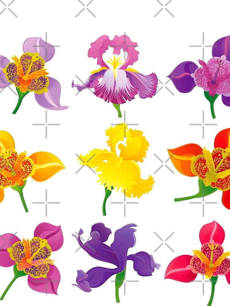 Tigridia & Iris by rusanovska
