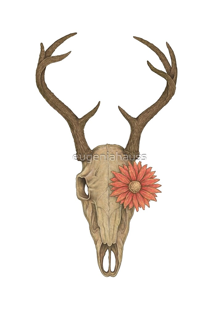 Deer Skull And A Flower by eugeniahauss