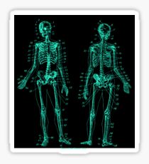 Anatomy: The Skeletal System -Sticker Sticker