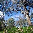 Springtime in Australia by Kat36