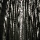 Sugar Pines by Kat36
