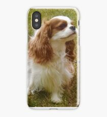 Rigby the King Charles Spaniel Cavalier iPhone Case
