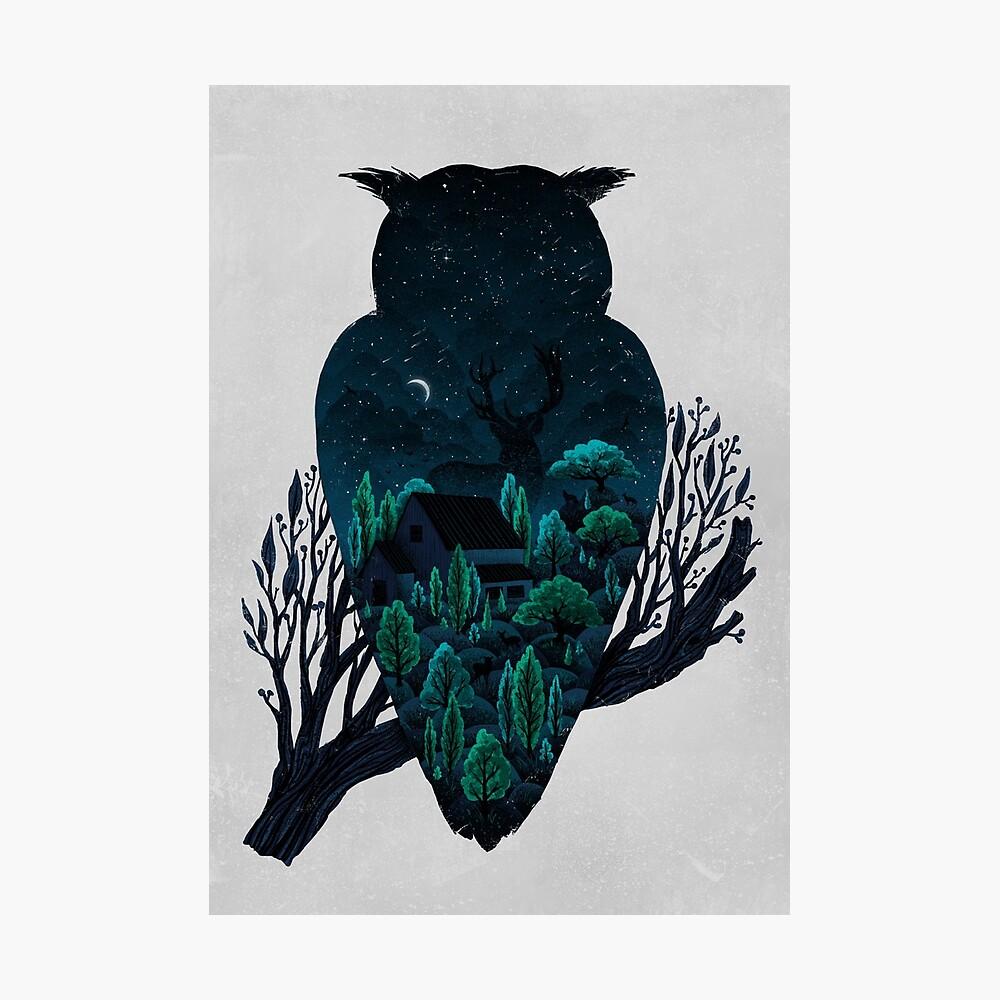 Owlscape Photographic Print