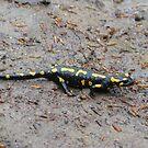 Carpathian Salamander by Elena Skvortsova