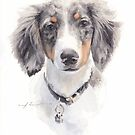 dappled dog watercolor by Mike Theuer