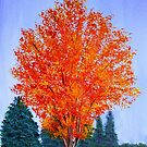 Fall Tree in ND by maggie326