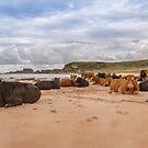 We Moo like to be beside the seaside by peaky40