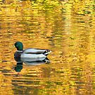 Autumn reflections at Crotona Park, New York City  by Alberto  DeJesus