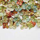 Hydrangea Petals no. 1 by Bethany Helzer