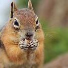 Chipmunk by Vendla