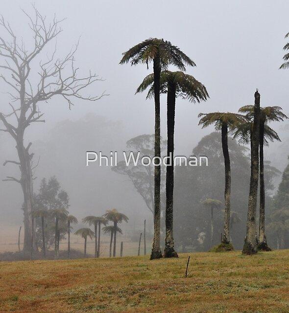 MOUNT WILSON MISTY TREE FERNS. by Phil Woodman