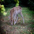 Deer in the woods by RosaMarieAshby