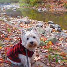 Westie in the Woods by MarianBendeth
