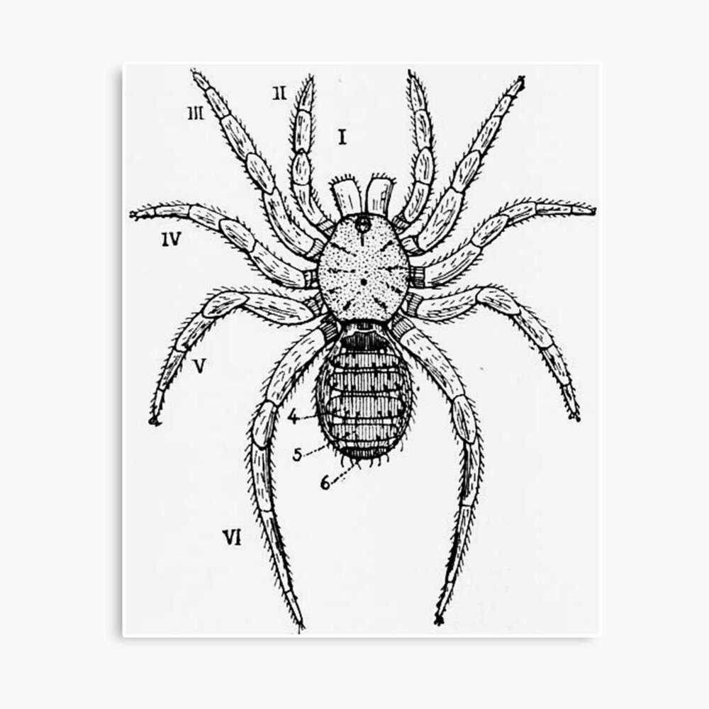 """Vintage Spider Diagram"" Canvas Print by BravuraMedia ..."