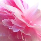 A dusting of Peony by MarianBendeth