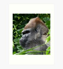Gorilla Group Leader Relaxing Art Print