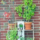 Pot plants on stand. by Billlee