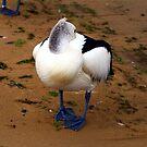 pidgeon toed pelican by geophotographic