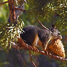 A Squirrel's Prize by Sandy O'Toole