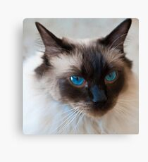 0807 Old Blue Eyes Canvas Print