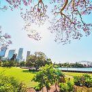 Jacaranda in Sydney Botanic Garden by Rod Kashubin