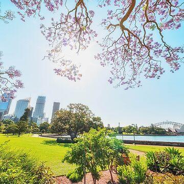 Jacaranda in Sydney Botanic Garden by RodKashubin