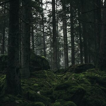 Early Morning In The Forest V by MyColdHands