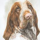Bracco Italiano by BarbBarcikKeith