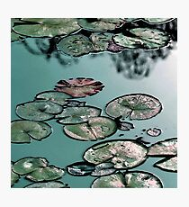 Shining Waterlilies on Green Photographic Print