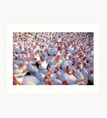 Turkey Farm Art Print