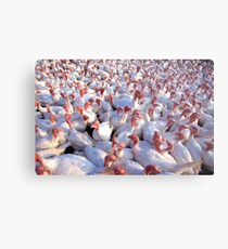 Turkey Farm Metal Print