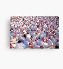 Turkey Farm Canvas Print
