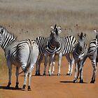 Zebras Taking a Stroll by Hermien Pellissier