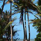 Pathway to Wonga Beach, North Queensland  by Virginia McGowan
