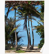Pathway to Wonga Beach, North Queensland  Poster