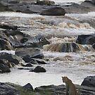 Leopard at the River - Léopard à la rivière by Yves Roumazeilles