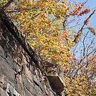 Harsimus Branch Embankment, Autumn View, Jersey City, New Jersey  by lenspiro