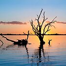 Sunset Silhouette by Ray Warren