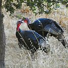 Gobble Gobble by Sandy O'Toole
