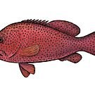 Red Sea Coral Grouper by Eugenia Hauss