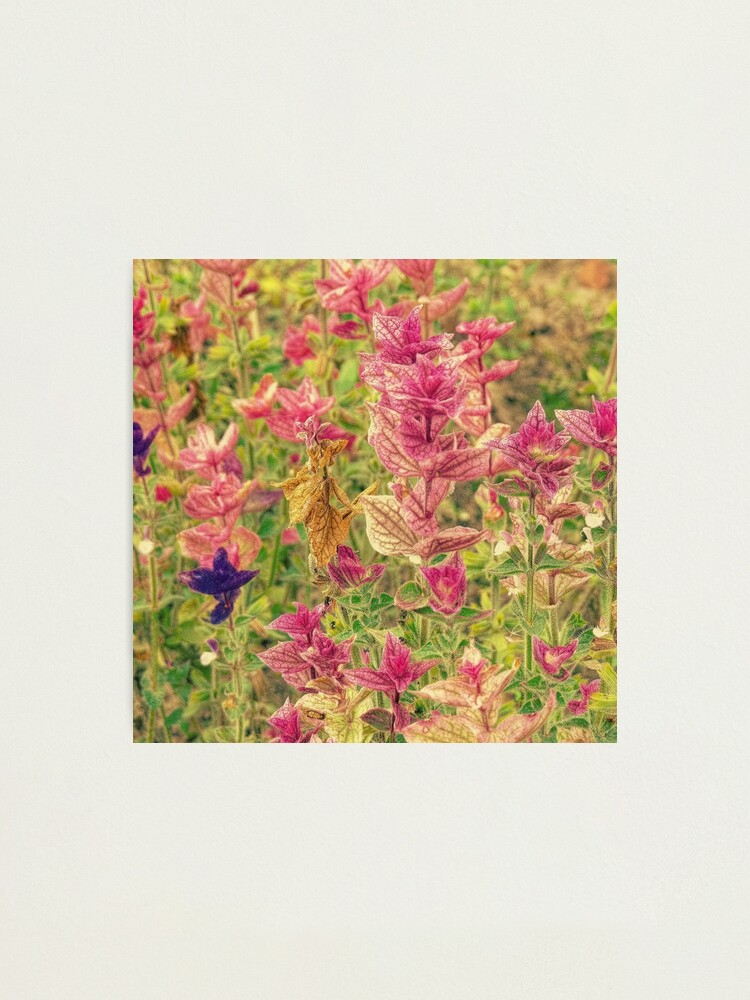 Alternate view of Floral Photographic Print