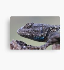 Western Fence Lizard Canvas Print