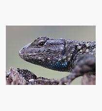 Western Fence Lizard Photographic Print